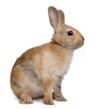 Sítě pro králíky a drůbež