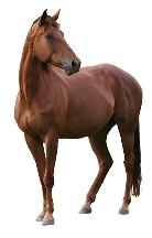 Sítě pro koně